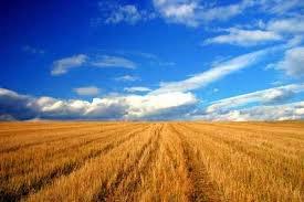 VANZARE TEREN AGRICOL SI FERMA IN ACTIVITATE=30.000.000 EURO - EXISTA SI UN PROIECT DE PARC EOLIAN